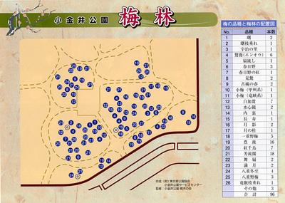 Koganei_kouen_bairin_map