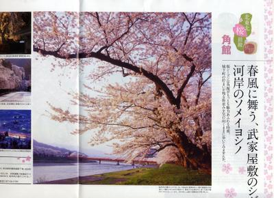 Jr2010_sakura_kitatouhoku_2