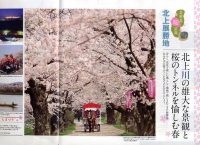 Jr2010_sakura_kitatouhoku_3