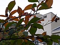 201111030092