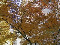 200512030007