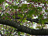 201204210033