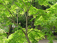 201204290035