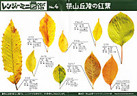 Sayama_leaf_pamph1