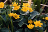oze_flower2