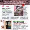sakura_pamphlet