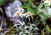 Tanigawa_flower1