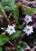 Tanigawa_flower5
