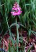 Tanigawa_flower6