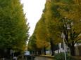 2009年11月14日 (3)