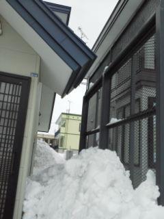 【遊】北海道も春が近いのか